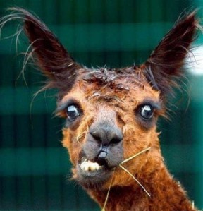 ugliest_animals_EP